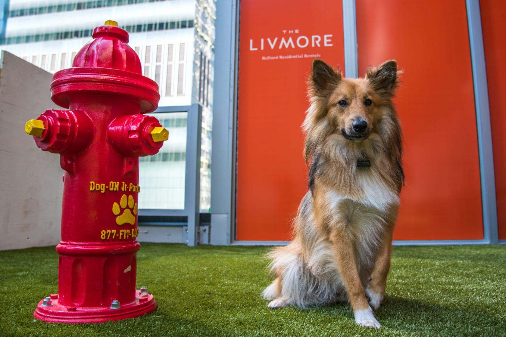 The Livmore amenities - outdoor dog areaa